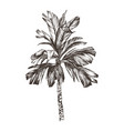 palm tree sketch for design vector image vector image