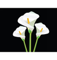 White Calla Lily flowers vector image