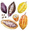 Watercolor cacao beans vector image