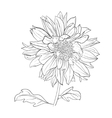 Hand drawn realistic dahlia flower vector image