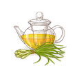 lemongrass tea vector image