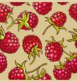 raspberry berries pattern vector image vector image