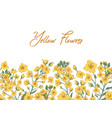 white banner with showy rapeseed plant and place vector image vector image