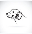 dog head labrador retriever on white background vector image vector image