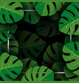 monstera deliciosa tropical leaves background vector image