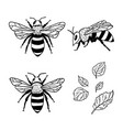 set with bees and leaves hand drawn vector image