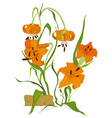 Tiger lily flower vector image vector image