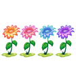 Six colorful flowering plants vector image vector image