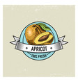 apricot vintage hand drawn fresh fruits vector image