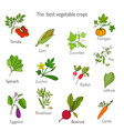 best vegetables crops vector image vector image