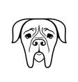 boerboel dog vector image vector image
