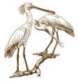 engraving two eurasian spoonbills vector image vector image