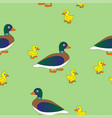 mother duck with her ducklings vector image