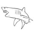 shark white angry graphics art vector image vector image