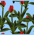 tropical red lily bud flowers with leaves vector image vector image