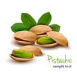 pistachio with leaves vector image vector image