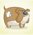 cartoon of a lovely bulldog vector image