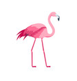 cartoon pink flamingo bird vector image