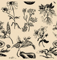 hand drawn herbs backgroundofficinalis vector image