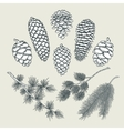 set botanical elements - cones and branches of vector image