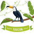 toucan bird cartoon character vector image vector image