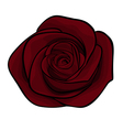 beautiful maroon roses alone isolated on a white b vector image vector image