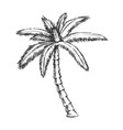 ribbon fan palm tropical tree monochrome vector image