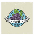 grapes vintage hand drawn fresh fruits background vector image