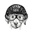 biker dog set vintage motorcycle emblems vector image vector image