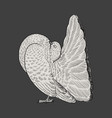 hand drawn couple white dove vector image