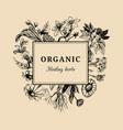 hand drawn herbs officinalis cosmetic vector image vector image