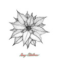 hand drawn sketch of christmas poinsettia or vector image vector image