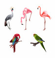 realistic collection beautiful exotic birds vector image