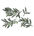 set sketch drawn olive branches vector image
