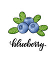beautiful cartoon red blueberry with lettering vector image vector image
