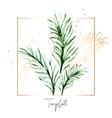 set palm floral elements tropical flower vector image vector image
