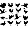 poultry silhouettes collection vector image vector image