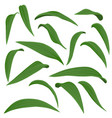 drawing leaves lily flowers vector image vector image