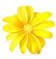 beautiful yellow flower vector image