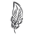 black and white feather design or color vector image