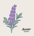 hand drawn lavender branch with leaves and vector image vector image
