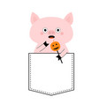 pig face head in pocket halloween pumpkin vector image