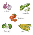 set of isolated hand drawn vegetables broccoli vector image