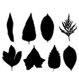 collection of silhouettes leaves vector image