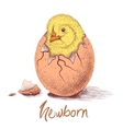 chick hatched from eggs vector image vector image