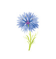 cornflower flower floral icon realistic cartoon vector image vector image