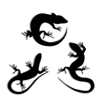 Set of Beautiful monochrome lizard lizard vector image