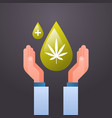 hands holding cbd hemp oil drop extracted from vector image