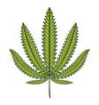green cannabis marijuana leaf vector image