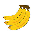 delicious bananas fruit vector image vector image